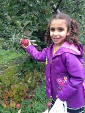 Apple-picking 2